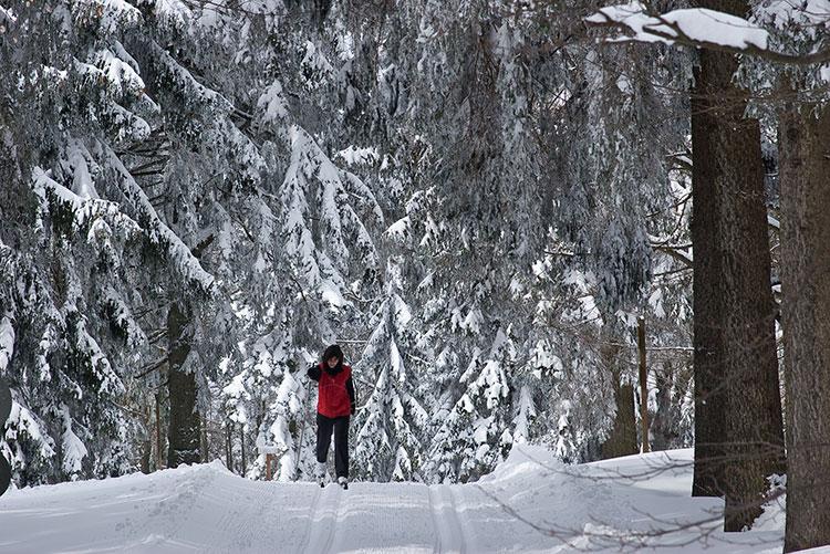 Langlauf in verschneiten Wäldern im Bayerischen Wald