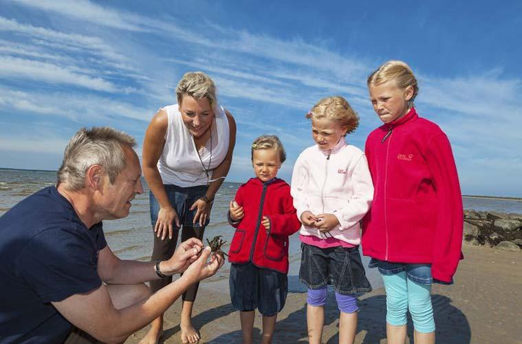 Große und kleine Entdecker kommen im Wattenmeer auf Ihre Kosten. Eine ganze Reihe unterschiedlicher Tiere hat hier ihre Lebenswelt.