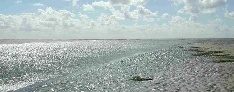 Das Weltnaturerbe Wattenmeer im Nordseeheilbad Büsum ist eine einzigartige Landschaft, die es sich zu entdecken lohnt.