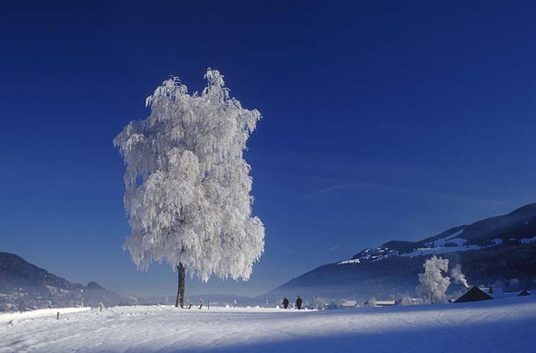 Zauberhaft glitzert das winterliche Allgäu